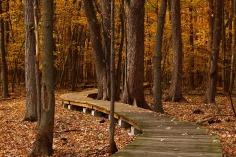 fall-1432252_960_720